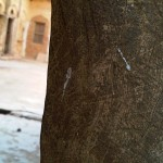 Rajgarh - My Ancestral Haveli - Peeking into History