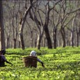 The love that Indians have for tea is no secret. In fact, India is one of the largest tea growers in the world and consumes an overwhelming 70% of its...