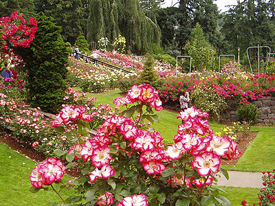Chandigarh The City Beautiful rose garden Mana Hotels