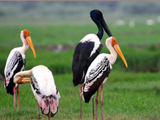 essay on bharatpur bird sanctuary