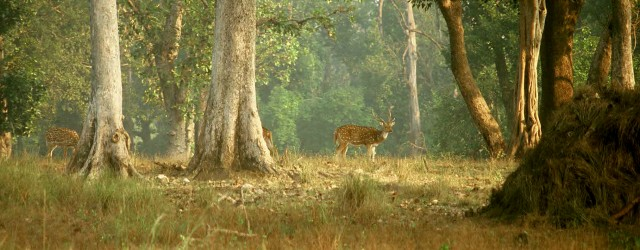 Madhya Pradesh has many national parks and Kanha National Park is the state's grandest tiger reserve, and also perhaps one of the best in India. It was said to have...