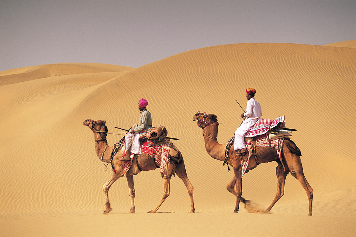 The Camel A Symbol Of Rajasthan