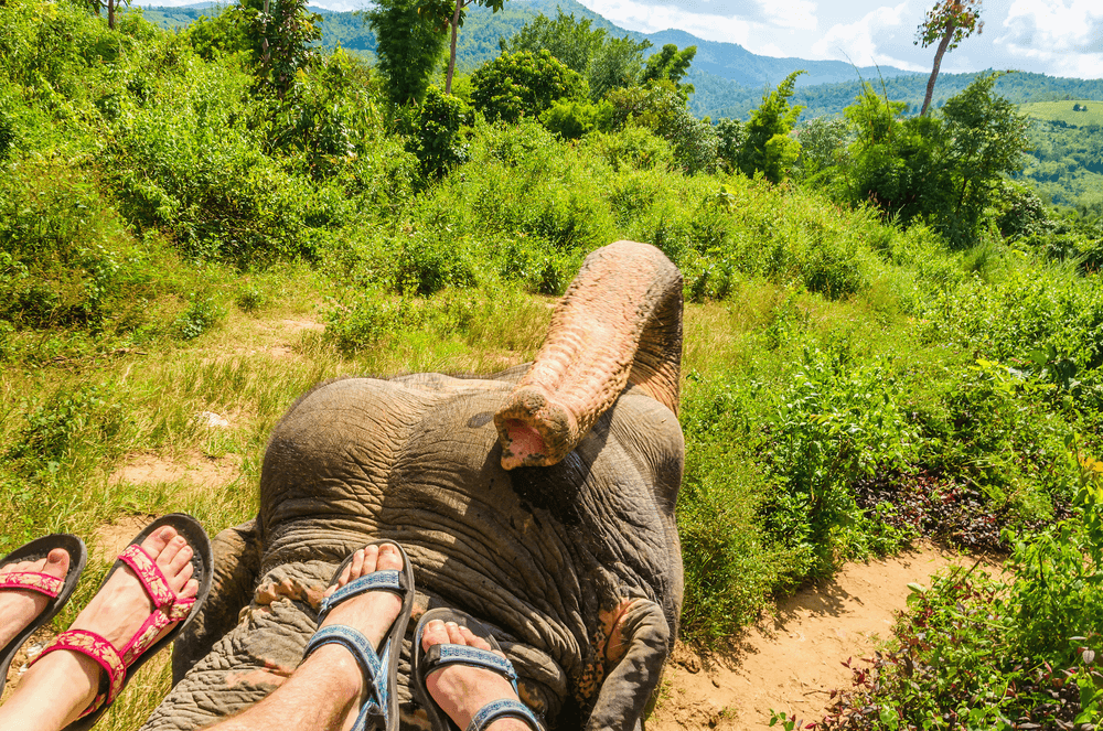 elephant ride at Amer Marg