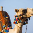 The excellence of Rajasthan lies in its rich legacy and languid modernity. As you explore transcending forts, fantastical royal residences and charming bazaars, you understand that Rajasthan holds its history […]