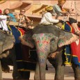 Camels, horses and elephants have always been the significant in the culture of Rajasthan. The wars and voyages, processions and pilgrimages that make Rajasthan's history exciting, would not have been […]